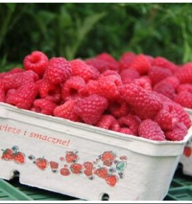opakowania na owoce wimar